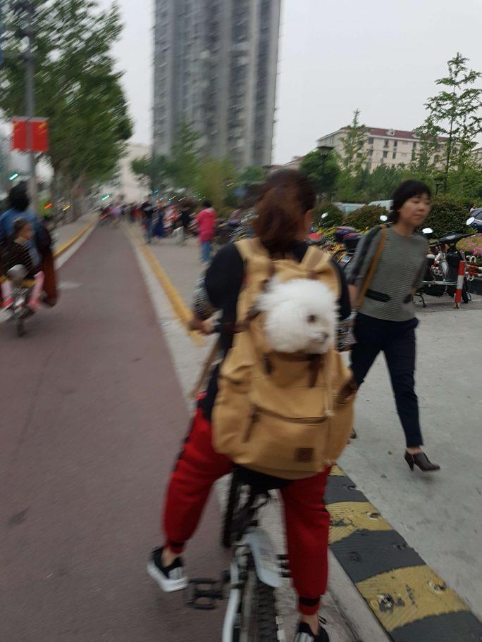 我喜欢中国!! 参考画像
