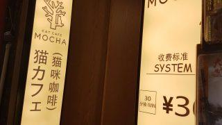 猫カフェの攻防(最強美女@Jちゃんと! 参考画像